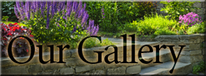 our-gallery